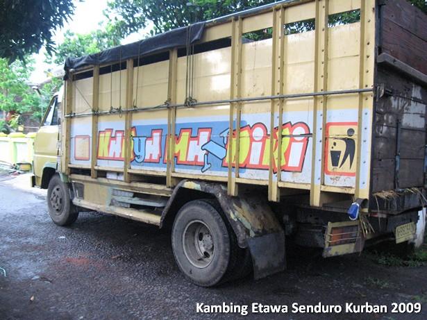 kambing-etawa-kurban
