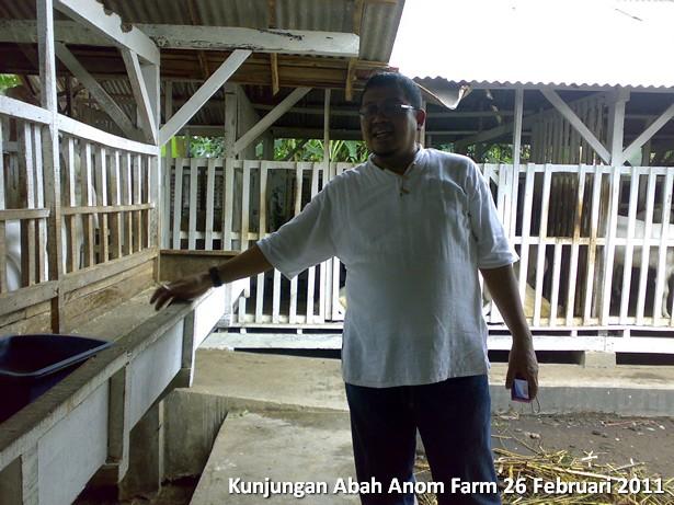 kunjungan-peternakan-etawa-abah-anom-farm