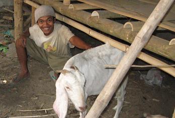 peternak kambing etawa