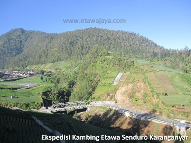 ekspedisi-kambing-etawa-senduro-karanganyar