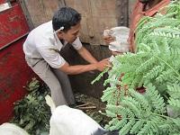 Ekspedisi Kambing Etawa Senduro Ke Sumatera Selatan (Bagian 1)