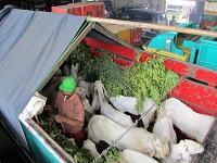 Ekspedisi Kambing Etawa Senduro Ke Sumatera Selatan (Bagian 2)