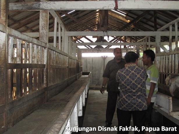 kunjungan-disnak-fakfak-papua-barat