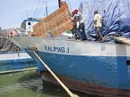 Pengiriman Kambing Etawa Senduro Ke Maluku