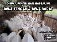 Dibuka Kuota Pengiriman Massal ke Jawa Tengah & Jawa Barat Maret 2015